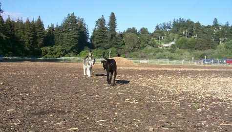 Aptos Dog Park - Dog Walk