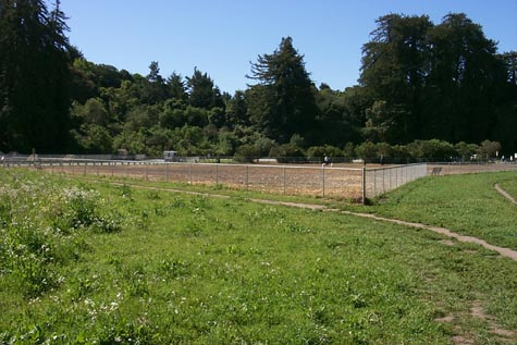 Aptos Dog Park From the Meadow